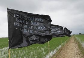 Imatge de banderes en mig de camps d'arròs del delta de l'Ebre.