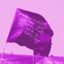 Imatge il·lustrativa del projecte. Bandera en camps d'arròs